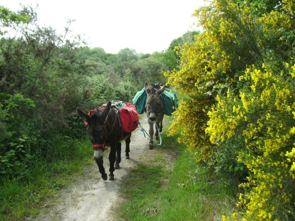 Train de mules dans la pampa fleurie nos z 39 anes z 39 et nous - Fleur de pampa ...
